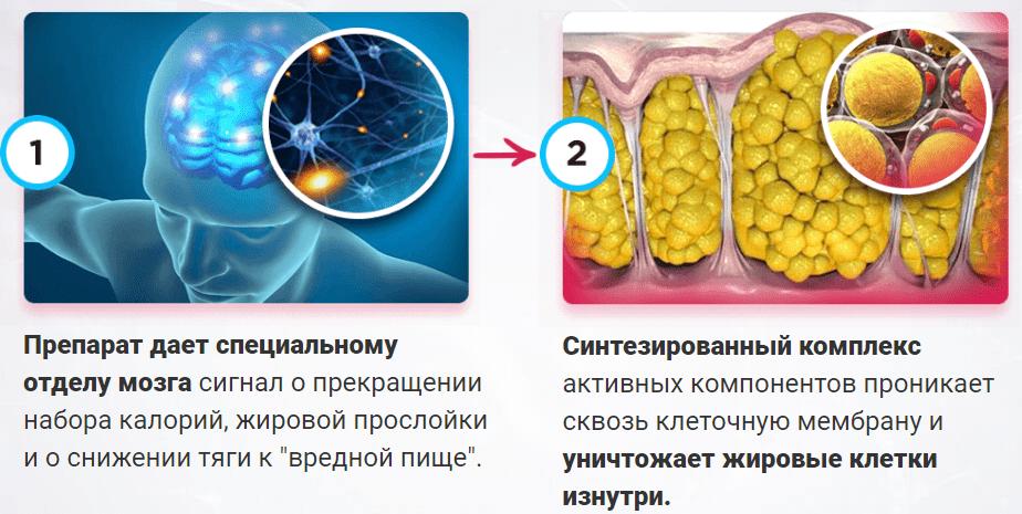 принцип действия нейросистема 7